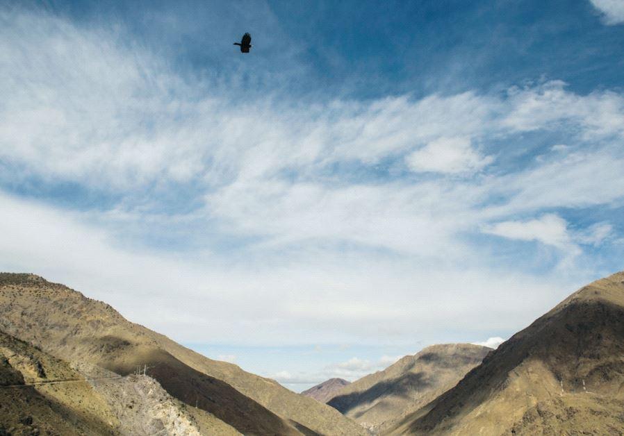 A bird flies over the Atlas Mountains. Credit: Sarah Levi